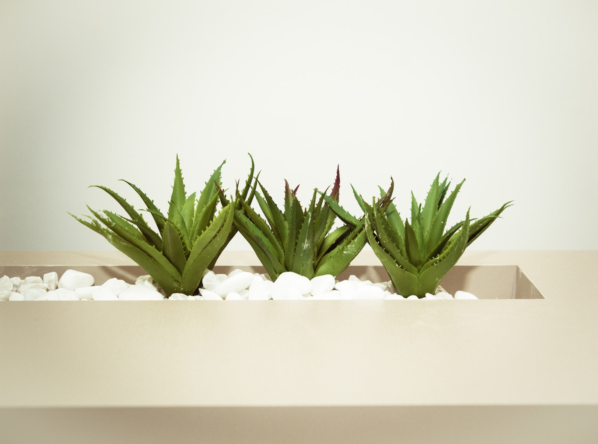 All You Need To Know About Aloe Vera Benefits & Side Effects